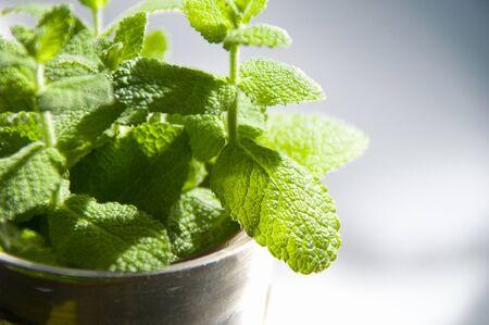 sensation: Mint