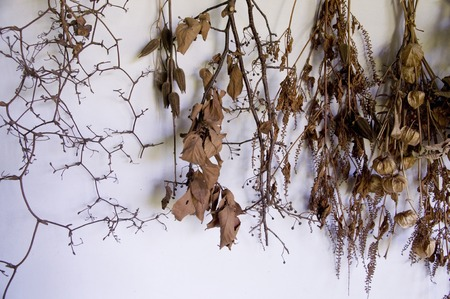 dried flowers: Dried flowers Stock Photo