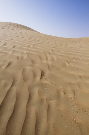 desert footprint: Footprints in the desert and insects