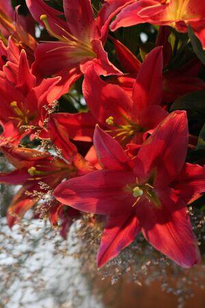 crimson colour: Flower arrangement Stock Photo