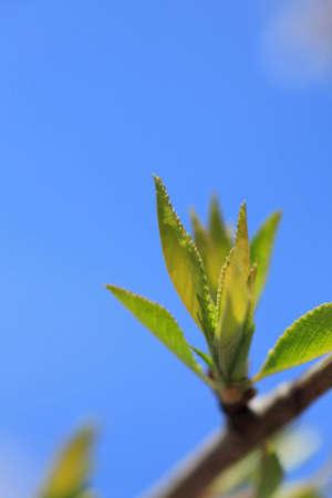 chlorophyll: New shoots