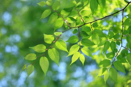 chlorophyll: Fresh green