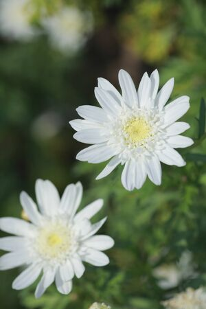 florid: White flowers Stock Photo