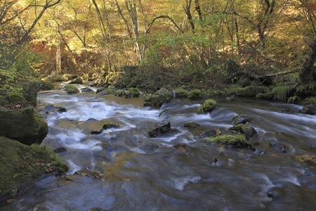 mountain stream: Autumn leaves and mountain stream