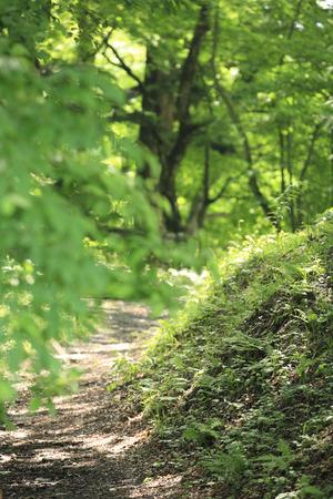 shirakawa: Site of Shirakawa