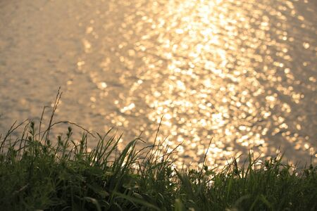 twinkles: The reflection of the setting sun of the TAMA river water