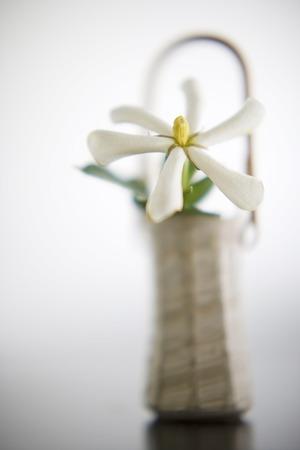 gardenia: Gardenia