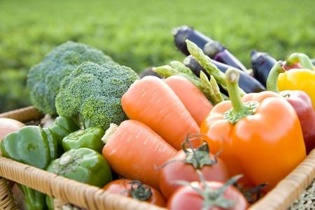 materia prima: Verduras