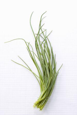 cebolleta: Cebollino