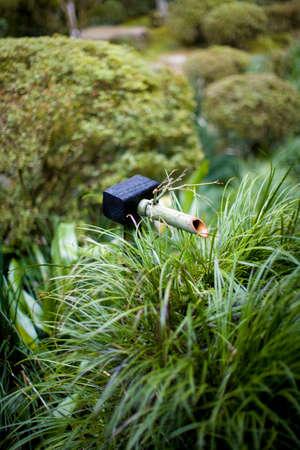 fetching: Japan garden