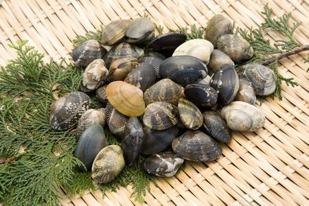 stuff fish: Clams Stock Photo