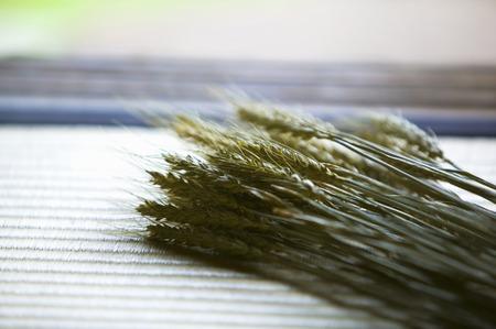 verandah: Wheat
