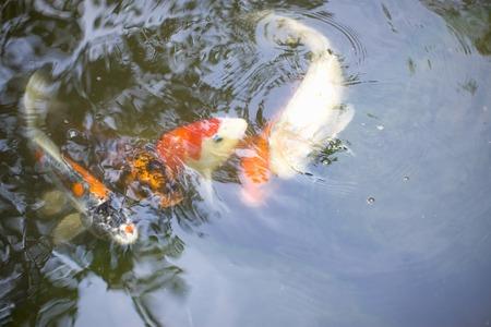 freshwater aquarium plants: CARP Stock Photo