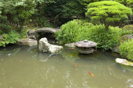 freshwater aquarium plants: Japan garden