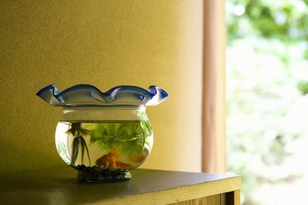 Goldfish Bowl photo