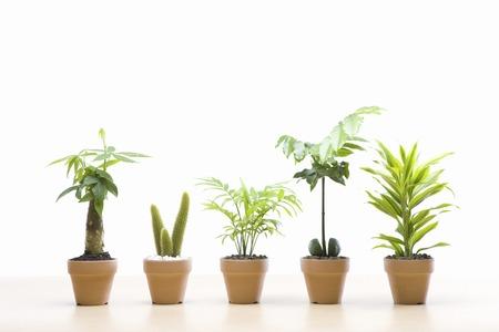 Eco afbeelding