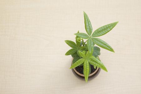 yeşillik: Yeşillik bitkiler Stok Fotoğraf