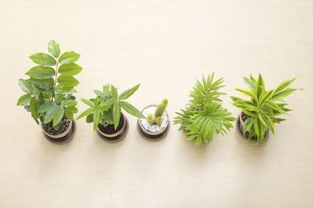 단풍 식물 스톡 콘텐츠