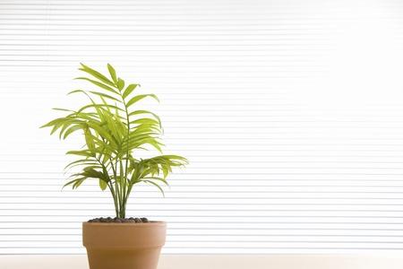 brainpan: Foliage plants
