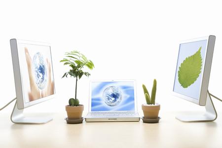 potted plant cactus: Echo image Stock Photo
