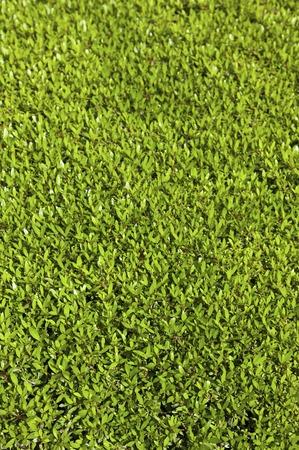 foliage: foliage