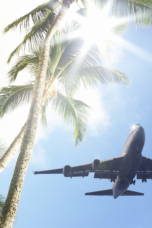 airliner: Trees airliner and palm