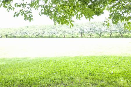 bathed: Vegetation bathed in sunshine of summer Stock Photo