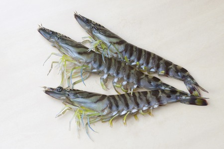 expensive food: Tiger prawn Stock Photo