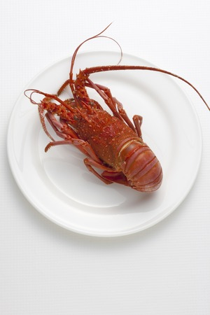 expensive food: Rock lobster