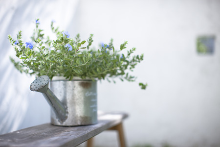 laid back: Foliage plants placed in the garden Stock Photo