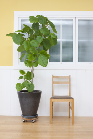 gradual: Chairs and ornamental plants