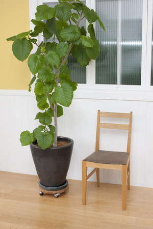 laid back: Chairs and ornamental plants