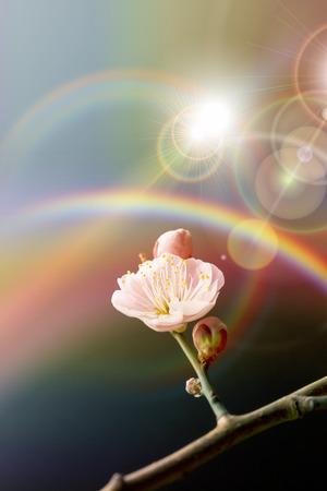 梅の花 写真素材 - 40210649