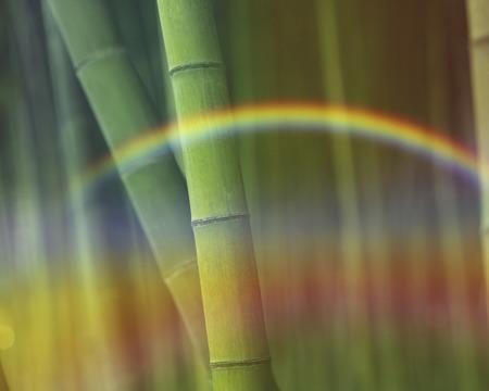 arboleda: Bosque de bamb? Foto de archivo