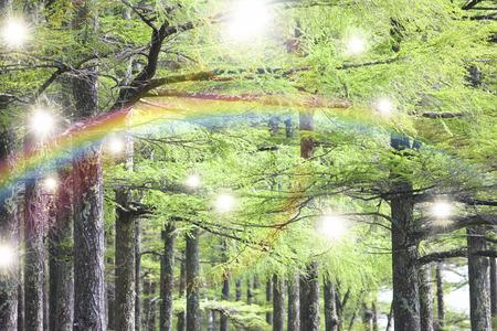 cedars: Cedars