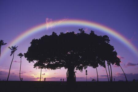 Grote boom en regenboog