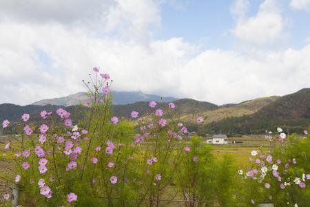 saga: Kyoto, North Saga
