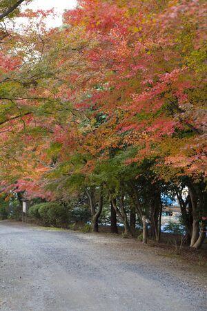 immobility: Mitsui-Dera Temple