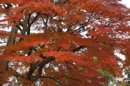 immobility: Autumn leaves