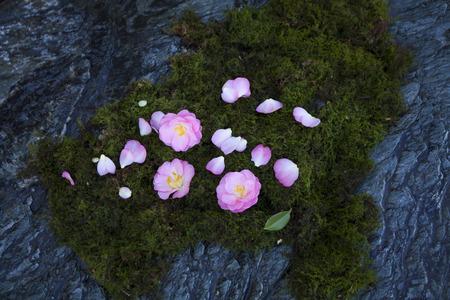 haiku: Camellia and MOSS