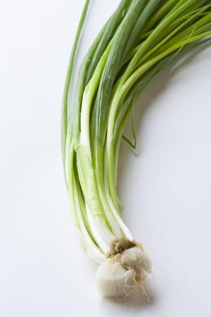 cebollas: Cebollas de verdeo