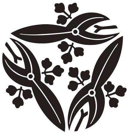 trifolia: Instead three follow Sawakata instead honey nephew Sagittaria trifolia Stock Photo