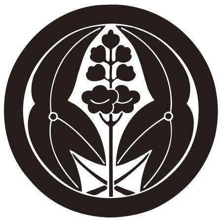 trifolia: Sawakata holding a round Sagittaria trifolia fired a round