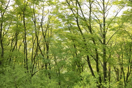 Wooded area Stock Photo