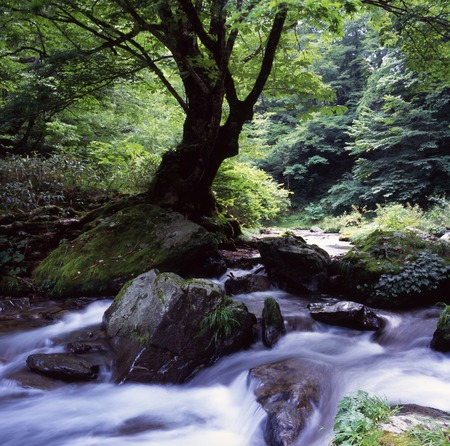 Ashiu forest