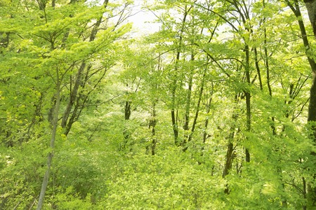 thicket: Wooded area Stock Photo