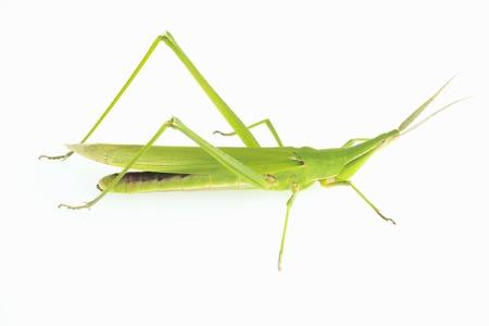 grasshoppers: Show Ryo grasshoppers