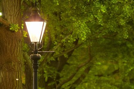 treelined: Gaslight and ginkgo tree-lined Koen-dori Yamashita