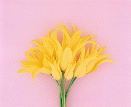cuteness: Tulip