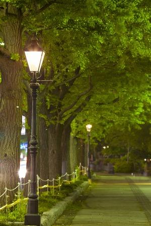 Gaslight and ginkgo tree-lined Koen-dori Yamashita